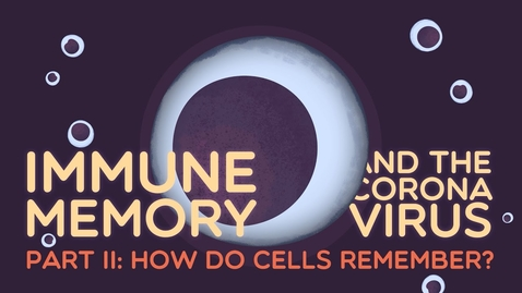 Thumbnail for entry Immune Memory and the Coronavirus Part II: How do cells remember?