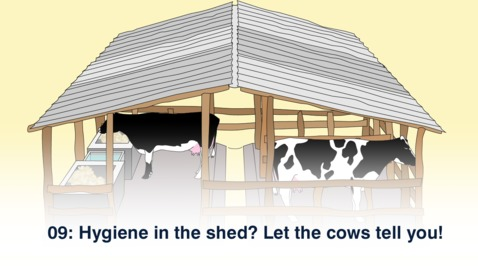Thumbnail for entry 09: Hygiene in the shed? Let the cows tell you!