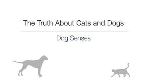 Thumbnail for entry Week 3 - Dog senses