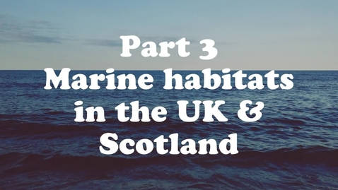 Thumbnail for entry Lesson 3: Ocean Biodiversity, Food Webs and Habitats