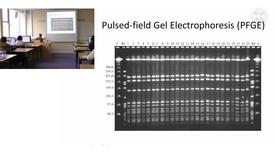 Thumbnail for entry 1. Molecular epidemiology - practical 1
