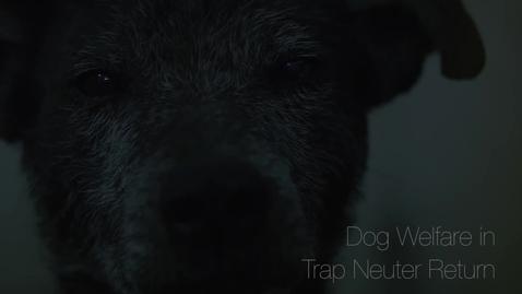 Thumbnail for entry Dog Welfare Programme