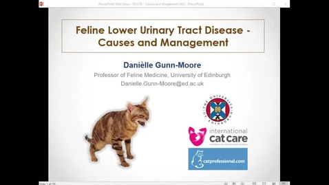 Thumbnail for entry Feline Lower Urinary Tract Disease - Practical Management - Clinical Club