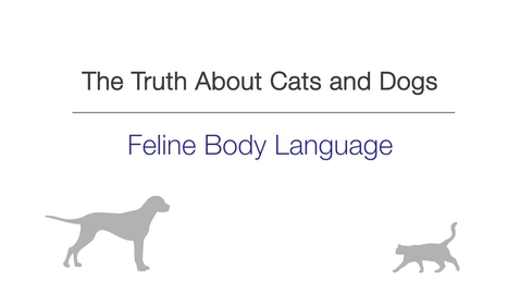 Thumbnail for entry Feline Body Language
