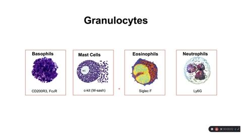 Thumbnail for entry Th2_Wk3_Pt5_Granulocytes_2020