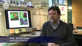 Thumbnail for entry David Gray - Biological Sciences- Research In A Nutshell - School of Biological Sciences -21/01/2013
