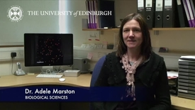 Thumbnail for entry Adele Marston - Biological Sciences- Research In A Nutshell -  School of  Biological Sciences -26/06/2012