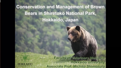 Thumbnail for entry Conservation and Management of Brown Bears in Shiretoko National Park