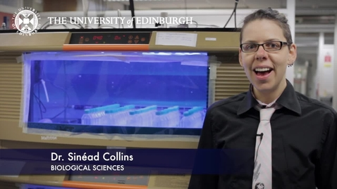 Thumbnail for entry Sinead Collins - Biological Sciences- Research In A Nutshell - School of Biological Sciences -06/11/2012