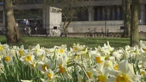 Thumbnail for entry Daffodils in George Square