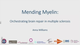 Thumbnail for entry Mending myelin: orchestrating brain repair in MS