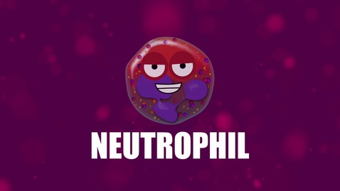 Thumbnail for entry Supercytes - How to say 'Neutrophil'