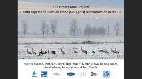 Thumbnail for entry The Great Crane Project