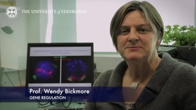 Thumbnail for entry Wendy Bickmore -Gene Regulation-Research In A Nutshell- MRC Institute of Genetic and Molecular Medicine-08/04/2014