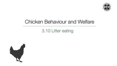 Thumbnail for entry Week 3:  3.10 Litter Eating