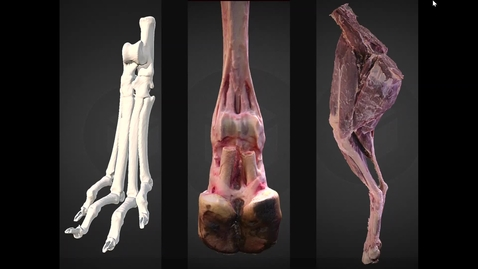 Thumbnail for entry Demonstration of 3D anatomy models at R(D)SVS