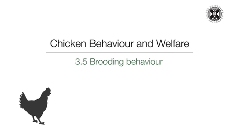 Thumbnail for entry Week 3:  3.5 Brooding Behaviour