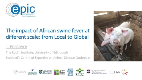 Thumbnail for entry The impact of African swine fever at different scale: from Local to Global