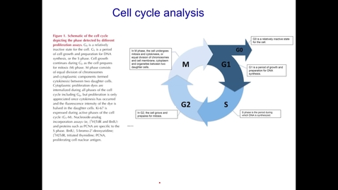 Thumbnail for entry Cell proliferation and cell cycle analysis