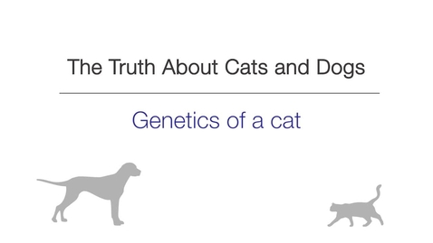 Thumbnail for entry Week 2 - Genetics of a Cat