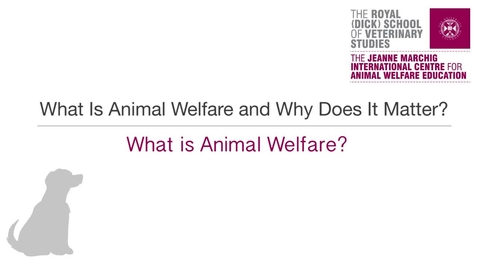 Thumbnail for entry Wk 2 - What is Animal Welfare