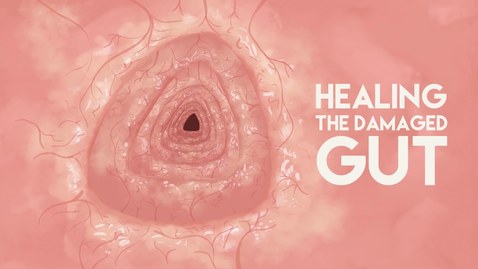 Thumbnail for entry Healing the damaged gut