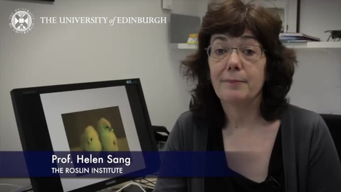 Thumbnail for entry Helen Sang - The Roslin Institute - Research In A Nutshell - Royal (Dick) School of Veterinary Studies -07/04/2014