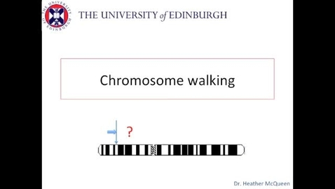 Thumbnail for entry Chromosome Walking