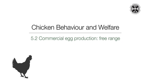 Thumbnail for entry Week 5:  5.3 Commercial  egg production - free range