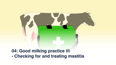 Thumbnail for entry 04 Good Milking Practice III - Checking for Mastitis - Oromiya