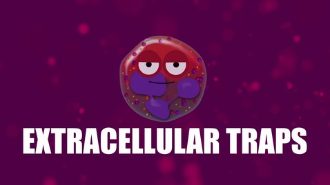 Thumbnail for entry Supercytes - How to say 'Extracellular traps'