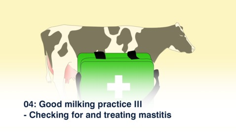 Thumbnail for entry 04: Good milking practice III - Checking for and treating mastitis