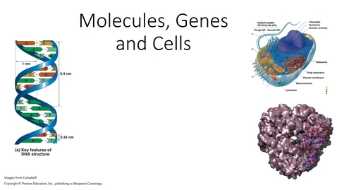 Thumbnail for entry Biological Sciences - Molecules, Genes and Cells 1