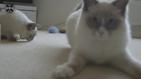 Thumbnail for entry The Truth About Cats And Dogs course trailer