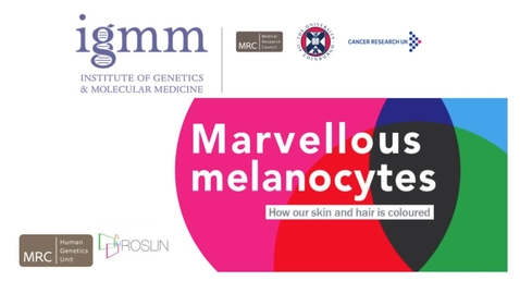 Thumbnail for entry Inaugural lecture: Marvellous Melanocytes - How our skin and hair is coloured