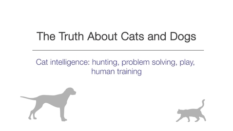 Thumbnail for entry Week 3 - Cat intelligence - hunting, problem solving, play, human training