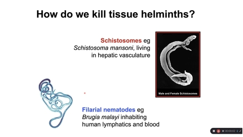 Thumbnail for entry Th2_wk5_HelminthImmunity_6_tissue helminths