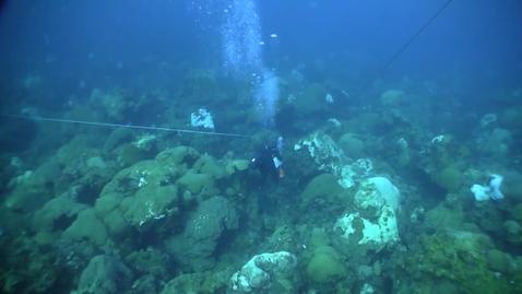 Thumbnail for entry Flower Garden Banks National Marine Sanctuary Coral Survey (East Bank)