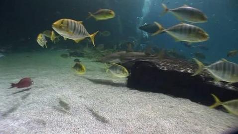 Thumbnail for entry Georgia Aquarium Ocean Voyager Exhibit