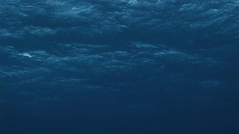 Thumbnail for entry Flower Garden Banks National Marine Sanctuary (FGBNMS) Drift Dive