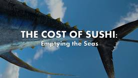 Vorschaubild für Eintrag The Cost of Sushi: Emptying the Seas