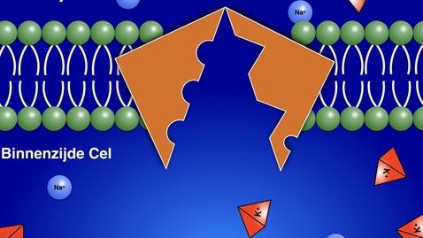 Natrium-kalium pomp