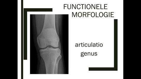 Thumbnail for entry Functionele morfologie van de knie