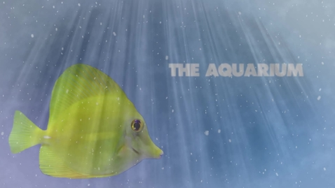 Thumbnail for entry THE AQUARIUM Taylor Jane Holland
