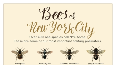 Thumbnail for entry Designing for Solitary Bees