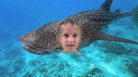 Thumbnail for entry Gabrielle Whale Shark
