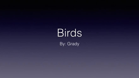 Thumbnail for entry Birds: by Grady