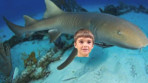 Thumbnail for entry Trevor Nurse Shark