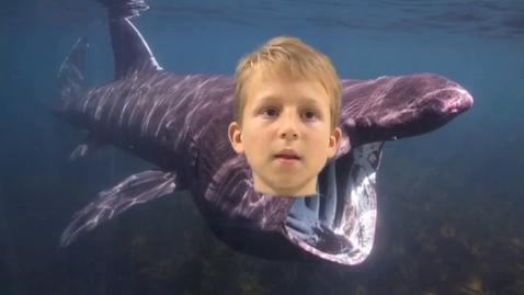Thumbnail for entry Sawyer Basking Shark