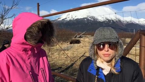 Thumbnail for entry Alaskan Wildlife Conservation Center